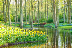 A scenic spring garden with tulips and water stock photos