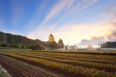 Hdr landscape- spring time Stock Photo