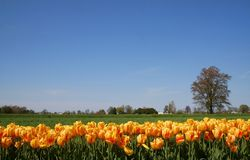 Scenic Spring Time stock photography