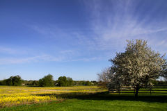 Scenic Spring Time Landscape Stock Photography