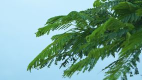 Fern leaves blown by the wind. A scenic steady shot of Fern leaves being blown away by the winds. The shot is taken under a sunny day stock video footage