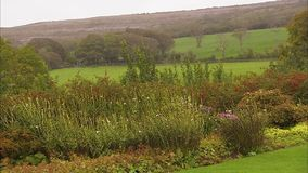 Colorful flowers on an Irish landscape. A scenic steady shot of various flowers on a green landscape. The wind blows the flowers stock video footage