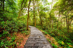 Scenic stone walkway across green woods. Summer landscape Royalty Free Stock Photo