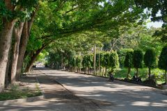 Scenic Street Forested with Acatia Trees royalty free stock photography