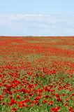 Scenic summer colorful field of poppies and wild flowers royalty free stock photo