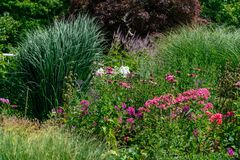 Scenic summer flower bed with purple phlox and ornamental grasses. Colourful summer flower bed with pink phloxes, ornamental grasses. white flowers and trees in royalty free stock image