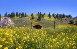 Scenic summer  landscape in Montana Stock Images
