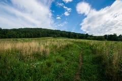 Scenic Summer Landscape on Overlook Drive Shenandoah National Pa Stock Image