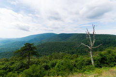 Scenic Summer Landscape on Overlook Drive Shenandoah National Pa Royalty Free Stock Images