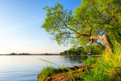 Scenic summer landscape with tree on lake shore. In sunlight in afternoon royalty free stock photo