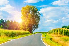Rural winding road in sunset. Scenic summer rural nature landscape view ot the beautiful winding suburban road with lonely tree, forest or wood, fields and royalty free stock photography
