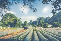 Scenic summer sunny landscape at Yangshuo County of Guilin, Chin. A Stock Photography