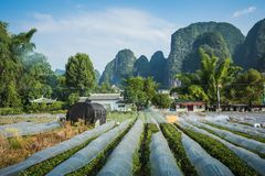Scenic summer sunny landscape at Yangshuo County of Guilin, Chin. A Stock Photos