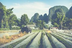 Scenic summer sunny landscape at Yangshuo County of Guilin, Chin. A Stock Images