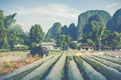 Scenic summer sunny landscape at Yangshuo County of Guilin, Chin. A Stock Photo