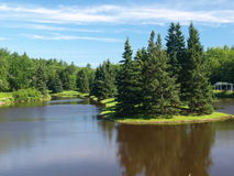 Scenic summer too. A nice view of trees and water and sky royalty free stock image