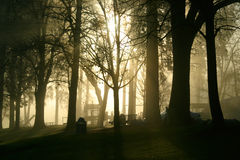 Scenic sunrise in park Royalty Free Stock Photography