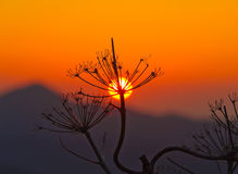 Scenic sunrise silhouette Stock Images