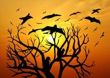Scenic Sunset Stock Image