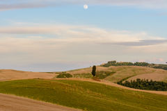 Scenic sunset landscape with cypress tree, soft hills, and moon. Rise in the sky in Tuscany stock photos