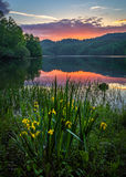 Scenic sunset, mountain lake, Kentucky. Blooming wild iris and sunset over calm waters in the Appalachian Mountains of Kentucky Royalty Free Stock Images