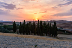 Scenic sunset in Val d'Orcia with cypress trees. In foreground stock photography