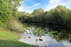 Scenic of swamps in national park. Scenic of swamps with trees in national park Stock Photos