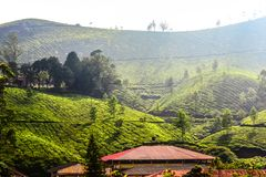 Scenic tea garden landscape. Scenic tea garden  landscape southindia teaplantation nature teagarden house tree greenery picturesque royalty free stock images