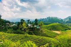 Scenic tea plantation in Sri Lanka highlands. Scenic tea plantation landscape in Sri Lanka highlands tropical village natural nuwara eliya rural field royalty free stock photography