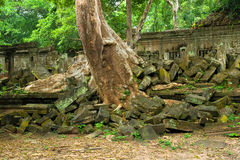 Scenic Temple Ruins in the Jungle Royalty Free Stock Images