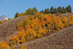 Scenic Teton Fall Landscape Royalty Free Stock Images