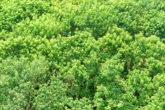 Scenic top view of mangrove forest. Bright green foliage. Of trees on summer sunny day. Amazing woods stock images