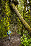 Scenic Trail in Columbia River Gorge, Oregon Stock Photos