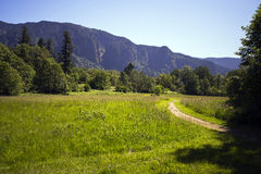 The scenic trail through the green meadow in Columbia Gorge Royalty Free Stock Photography