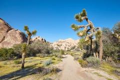 Scenic trail path in the Joshua Tree National Park, USA. Scenic trail path in the Joshua Tree National Park, California, USA stock photos