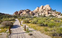 Scenic trail path in the Joshua Tree National Park, USA. Scenic trail path in the Joshua Tree National Park, California, USA royalty free stock image