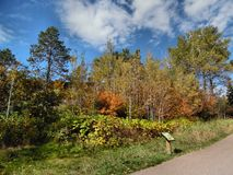 Scenic trail. Walking trail in the Gooseberry Falls State Park on the north shore of Minnesota Stock Photo