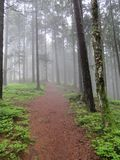 Foothpath leading into mystical, misty forest. Scenic trail at the Way of St. James with pinetrees mystically covered in a misty veil. Picture taken near the Stock Images