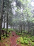 Foothpath leading into mystical, misty forest. Scenic trail at the Way of St. James with pinetrees mystically covered in a misty veil. Picture taken near the Stock Photography
