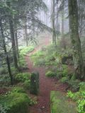 Foothpath within a mystical, misty forest. Scenic trail at the Way of St. James with pinetrees mystically covered in a misty veil. Picture taken near the scenic Stock Image