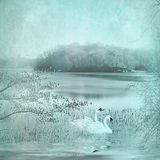 Scenic Tranquil Lake and swans Royalty Free Stock Images