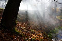 Scenic tree in autumn scene Royalty Free Stock Image