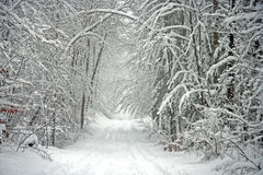 Scenic Tree Lined Winter Road Royalty Free Stock Photography