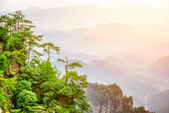 Scenic trees growing on top of rock, Avatar Rocks. Toned image. Scenic view of green trees growing on top of rock in the Tianzi Mountains Avatar Rocks, the royalty free stock images
