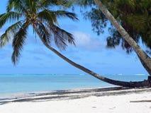 Scenic tropical beach. Palm tree on scenic tropical beach, Rarotonga island, Cook Islands Royalty Free Stock Photo