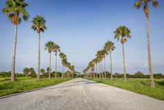 Scenic Tropical Road Stock Photo