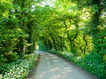 Scenic tunnel road in Southern England Royalty Free Stock Image