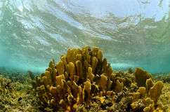 Scenic underwater coral in tropical destination Royalty Free Stock Photo