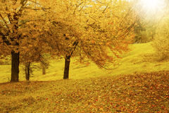 Scenic vibrant autumn countryside landscape in the warm fall sun Royalty Free Stock Image