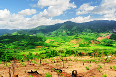Scenic view of amazing mountains and bright green rice fields royalty free stock photography